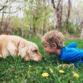 Reportage: op stap met een autismehond